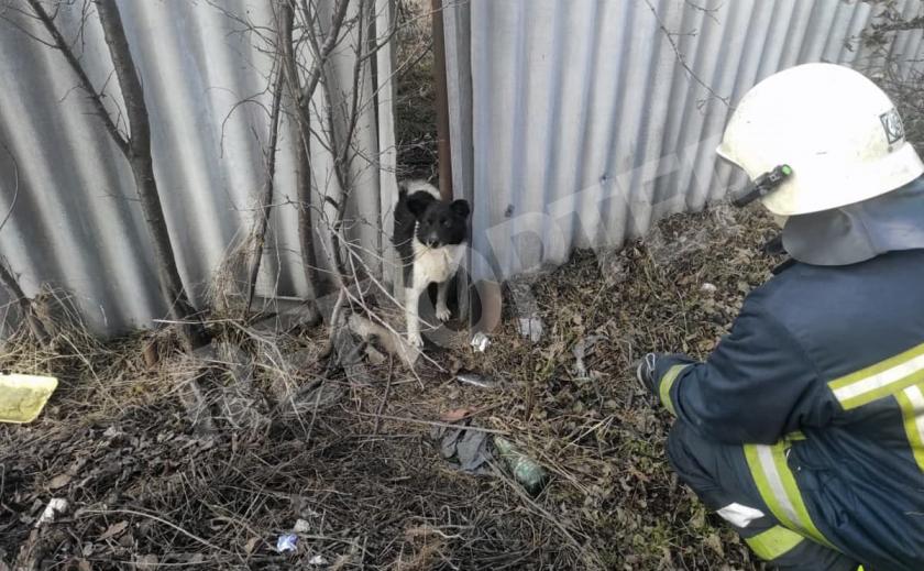В Павлограде спасли пёсика из западни