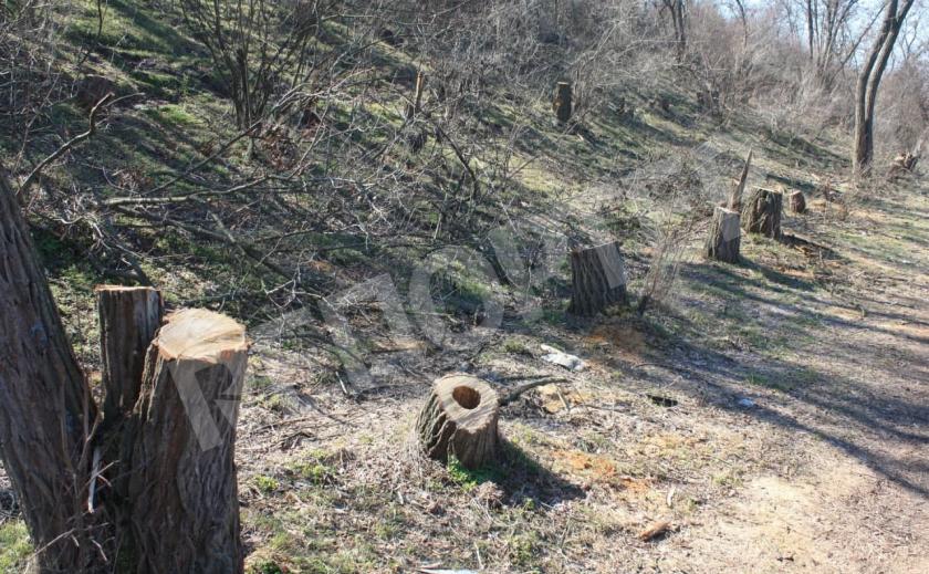Под Павлоградом криминальное трио нарубило дров на 270 тыс. грн