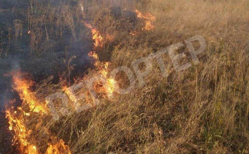 В Павлограде сгорели несколько гектаров сухостоя
